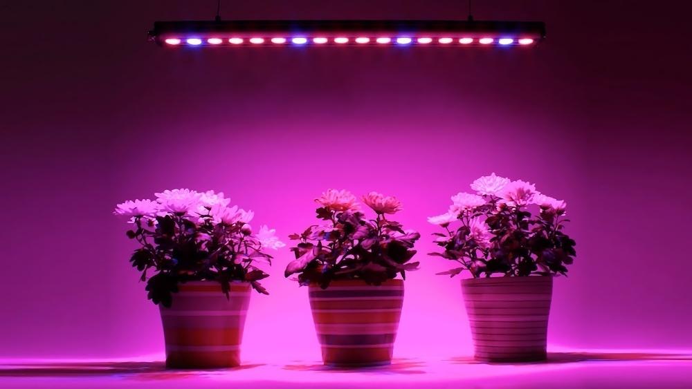 Растения превратили в полноценную замену светильникам