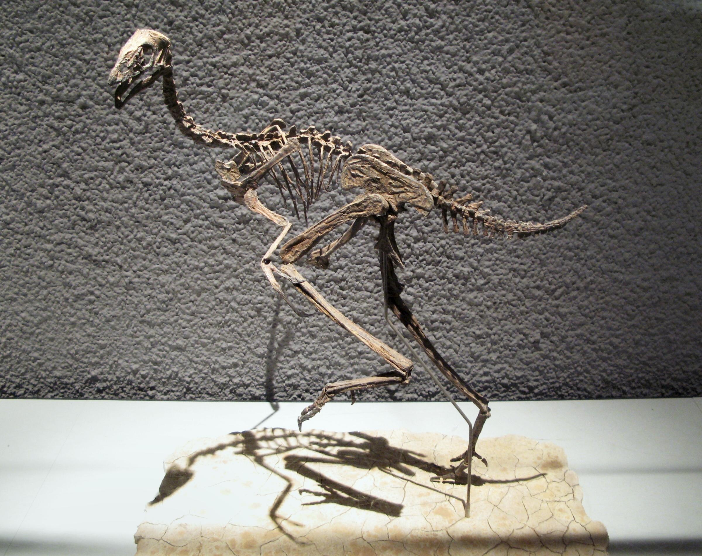 Учёные выделили хорошо сохранившиеся клетки динозавра