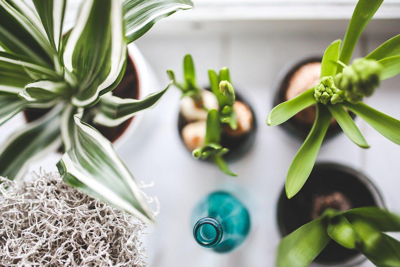 Учёные рассказали о пользе домашних растений для психического здоровья