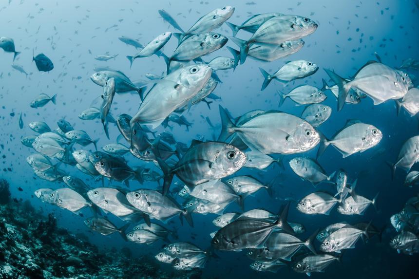 Инфекция рыб поможет получить лекарство от рака крови