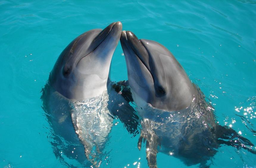 Учёные заявили о возможности людей развить способность как у дельфинов