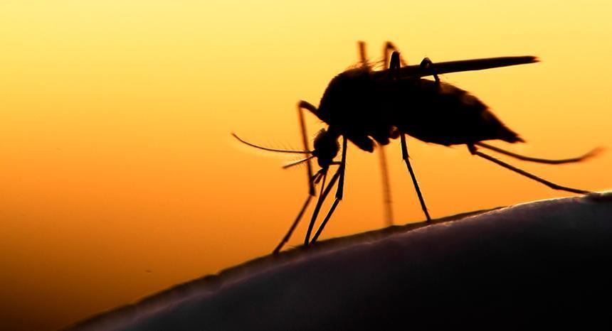 Россиянам рассказали, как человек заражается опасными болезнями от комаров