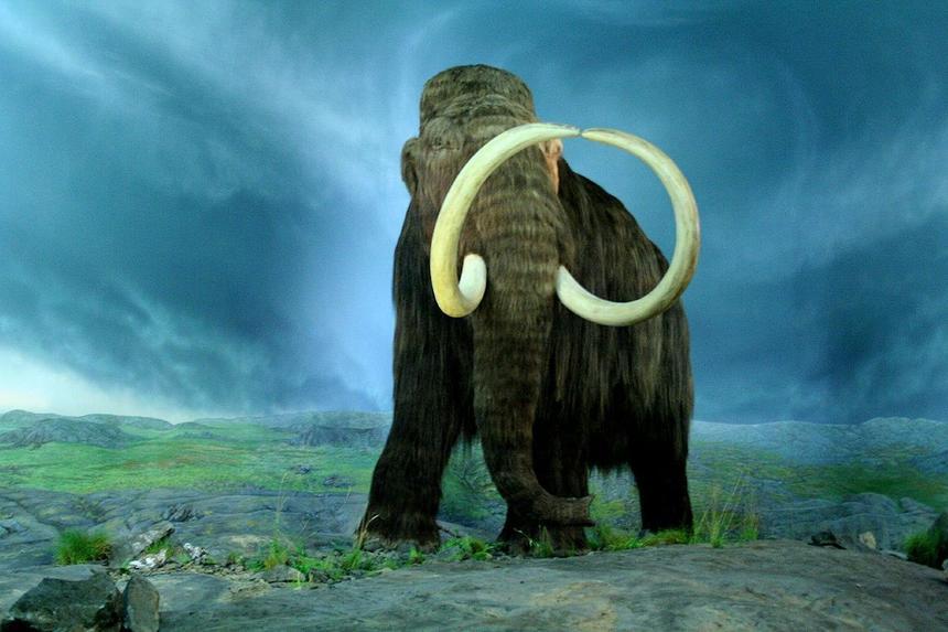 Ученые раскрыли причину вымирания мамонтов