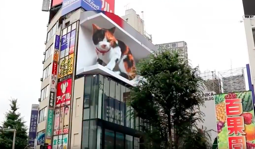 Огромного 3D-кота поместили на здание в Токио